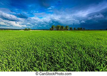 céu verde, prado, tempestuoso