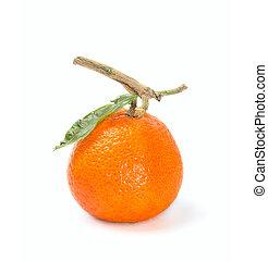 cítrico, fundo branco, frutas