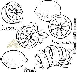 cítrico, jogo, limão, vetorial