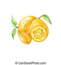 cítrico, kumquat, frutas