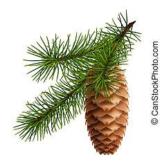 cône pin, à, branche