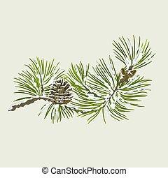 cône, pin, branche, neige
