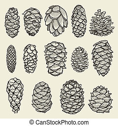 cônes sapin, arbre, pin, cèdre, impeccable, noël