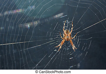 côté, araignés, regard, sous, grand plan