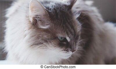 côté, chaton, dévisager