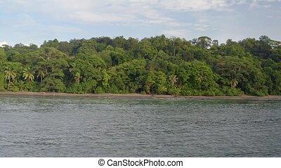 côte, pacifique, rainforest