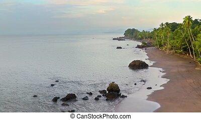 côte pacifique, rainforest