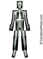 côte, tête, , , ), , anatomique, position., , corps, , , (x-ray, , , :, , , , , , entier