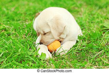 CÙte, Kugel,  labrador, hund, junger Hund, Gummi, gras, spielende, Liegen, Apportierhund