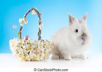 CÙte, Ostern, kaninchen