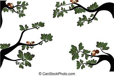CÙte, ramos, esquilo