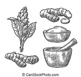 cúrcuma, raíz, polvo, y, flor, con, mano de mortero, y,...