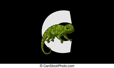 c, (foreground), litera, kameleon