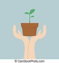 c, groei, holdingshanden, kleine, plant