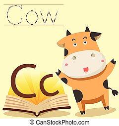 c, illustrator, vocabulário, vaca