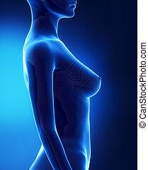 c, lateral, bröst, kvinnlig, synhåll, storlek
