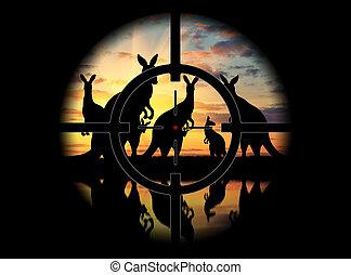 caça, poacher, canguru