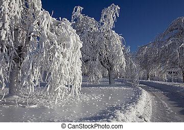 caídas de niagara, hielo rime, árboles