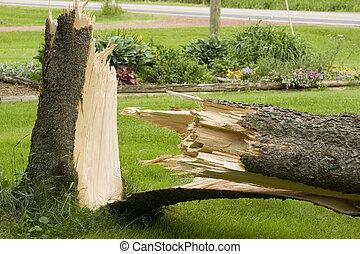 caído, árvore pinho