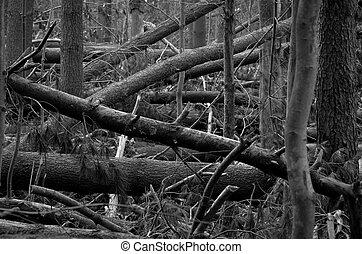 caído, floresta