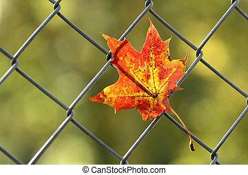caído, folha outono, ligado, cerca