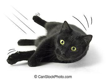 caído, gato