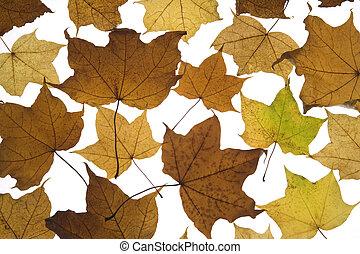 caído, outono sai