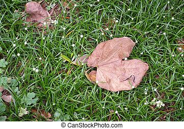 caído sai, em, outono