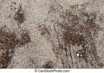 caído, textura, solo, .cones, outono, ground., cones., fundo, bonito, marrom, pine.