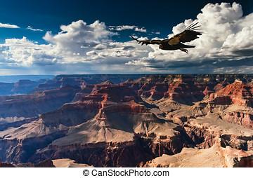 cañón, parque, nacional, magnífico
