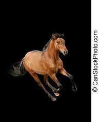 caballo, aislado