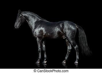 caballo, aislado, en, negro