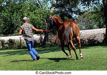 caballo, alrededor, pluma