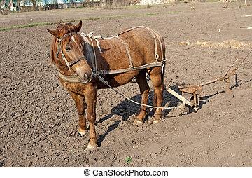 caballo, arado