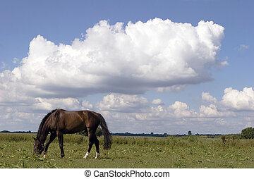 caballo, bahía