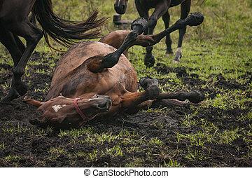 caballo, barro, campo, rodante, pasto o césped, abierto
