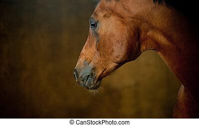 caballo, cicatrizarse