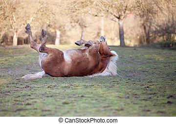 caballo, colocar, en, espalda, y, tener diversión, a, rollo, en, arena
