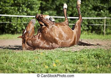 caballo, colocar, espalda