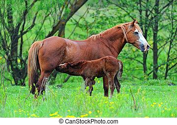 caballo, con, un, vaquita, en, pasto