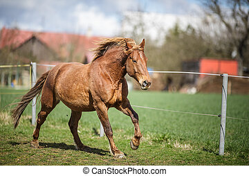 caballo, corriente, rápido