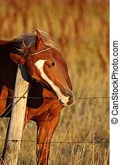 caballo, cuello, cerca, frotamiento, contra, poste