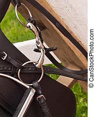 caballo, dressage, saddle., arriba, brida, cierre