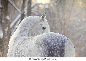caballo, en, invierno