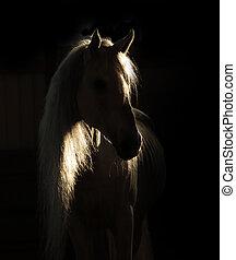 caballo, en la sombra