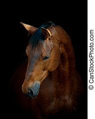 caballo, en, negro