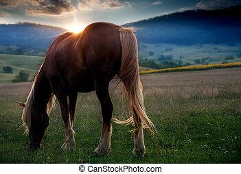 caballo, en, ocaso