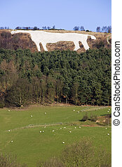 caballo, -, grande, yorkshire, gran bretaña, kilburn, blanco