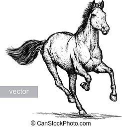 caballo, ilustración, grabar
