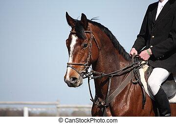 caballo marrón, s, retrato, durante, deporte